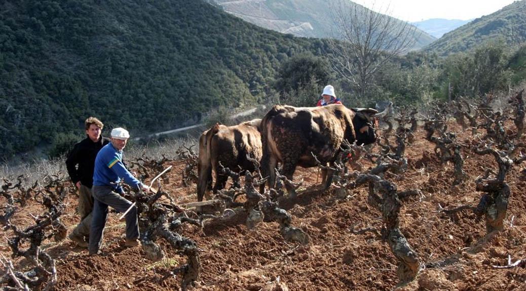 Smukke vine fra Bierzo